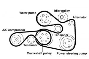 A Serpentine Belt